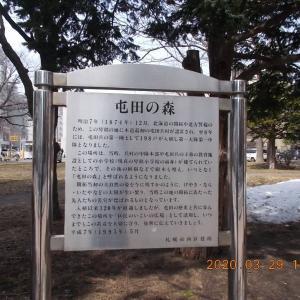 200329 蝦夷山桜