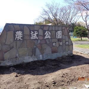 200428 農試公園の桜