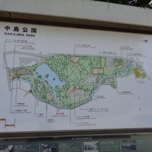 200720 紫陽花 中島公園