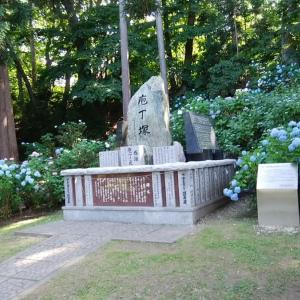 200720 紫陽花 円山公園