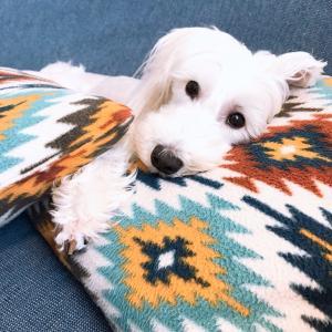 【アリメペット】犬用乳酸菌