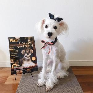 2019年『Wan』11月号 魔性の犬種特集