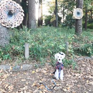 【善福寺公園】トロールの森2019