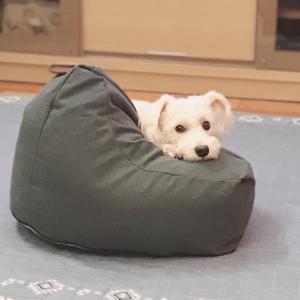 【CAINZ】ダメになれるか?犬猫ビーズクッション