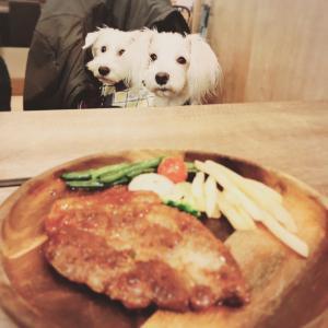 お台場の犬の聖地