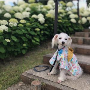 【お台場】紫陽花を見に行ってきた