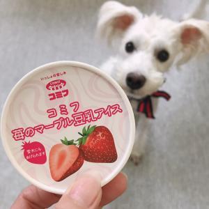 初めてアイスクリームを食べた反応