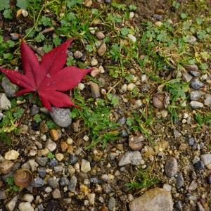 《漂着するもの》琵琶湖東岸 3
