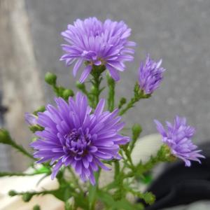 お花を生けられる…幸せ