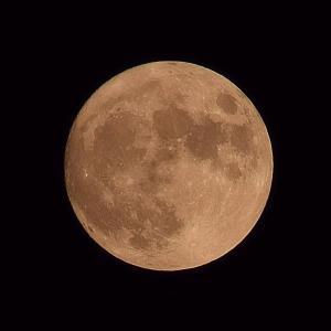 今日は中秋の名月。