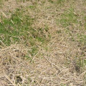 田んぼの土をふかふかにするために