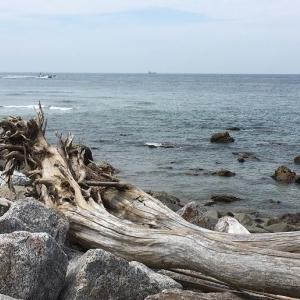息子や娘と渥美半島をぐるりと一周。メロンもゲット