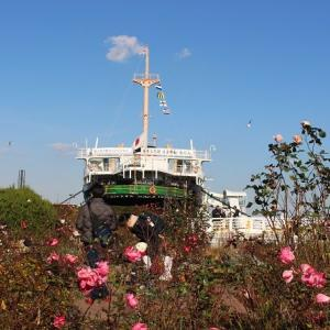 薔薇咲く港の見える丘とコクリコ坂。元町、横浜中華街散策