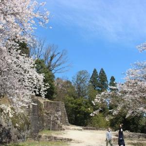 季節が変われば桜の城と化す、いつもの苗木城を歩く