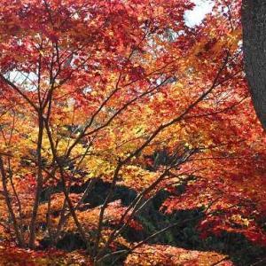天下第一の桜の城は紅に燃えて。信州高遠城址にあの秋の日も