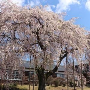 アルプスを望む桜の城ドライブで伊那谷ニュー・スポット巡り