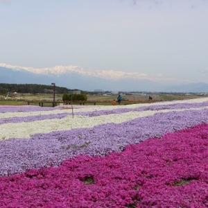 信州花フェスタで、平成最後のお出かけ行楽は花盛り