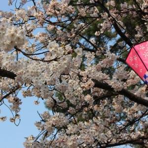 堅香子の花咲く高岡城址と、加賀百万石の金沢城の夕暮れ