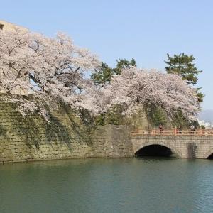 福の井の茶を飲み、桜のお濠沿いに散歩したのは春嶽と秀康の城