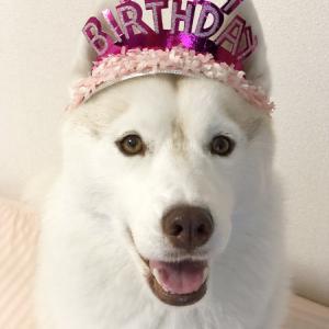 ♪ シマー 5th Birthday ♪