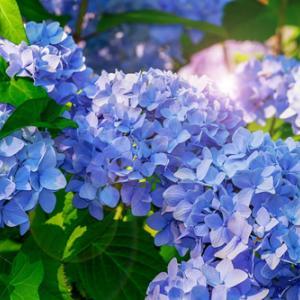 【レイキ伝授のご感想】レイキをかけるお花の延命実験は最終的に大きな違いがでて面白かったです!
