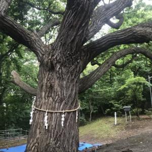 樹齢300年の樹と昼飲み
