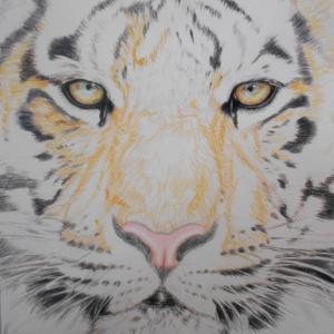 色鉛筆画 『虎』 その1