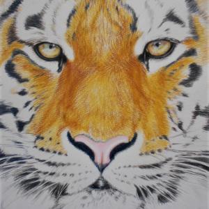 色鉛筆 トラ その3