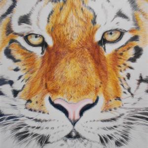 色鉛筆画 『トラ』 その4