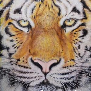 色鉛筆画 『トラ』 完成!