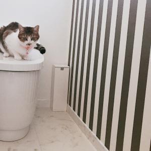 トイレを思い切ってタンクレスにしました!