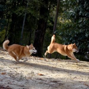 レイキセカンド~お孫さんと愛犬の思い出と神社(追記あり)