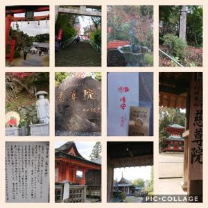 マイペースな和歌山観光と、高野山大師教会光寿支部の記録(追記あり)
