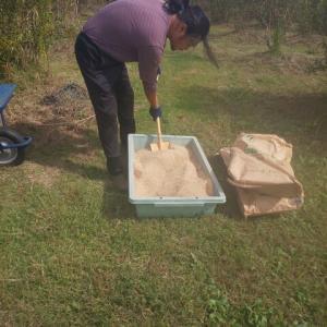 昨日は肥料撒き今日は粒マスタードつくり