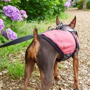 ライムと紫陽花