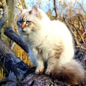 森の番人 Лесник — Король и Шут ロシア歌