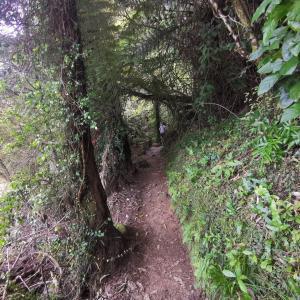 アビルタスマン国立公園でトレッキング