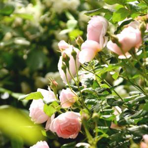 雰囲気のある開花