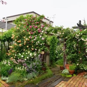 雨の庭の動画