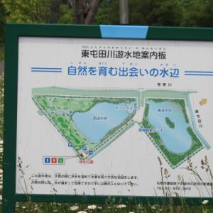 「東屯田川遊水地」の水草たち