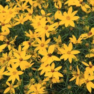 「百合が原公園」のユリの花など(No.2)