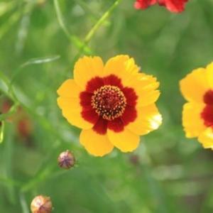 夏に咲く黄色い花(花壇の花を中心として)