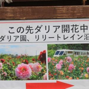 百合が原公園「ダリア園」(No.1)