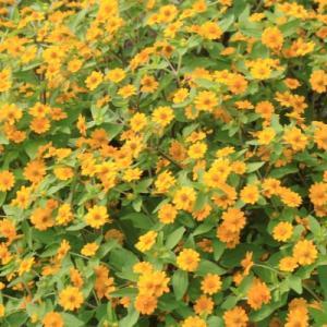 百合が原公園の花壇