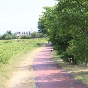 暑い中の散歩「中の川沿い」新川方面