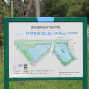 「東屯田川遊水地」と山野草