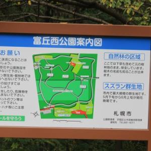 「富丘西公園」の草花