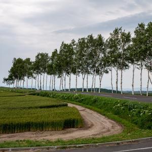 【旅行】美瑛の美しい丘を巡り、旭川で超絶品のジンギスカンを味わう!