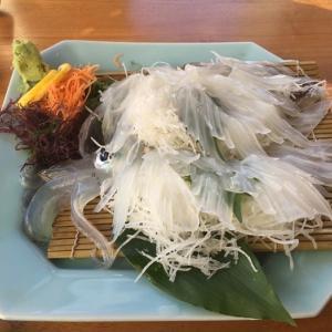 【食レポ】いか本家 ~ 呼子のイカは世界一!!今までで一番うまいイカ! ~ 【佐賀県唐津市】