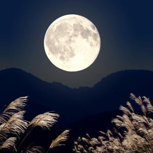 後の月(⌒‐⌒)